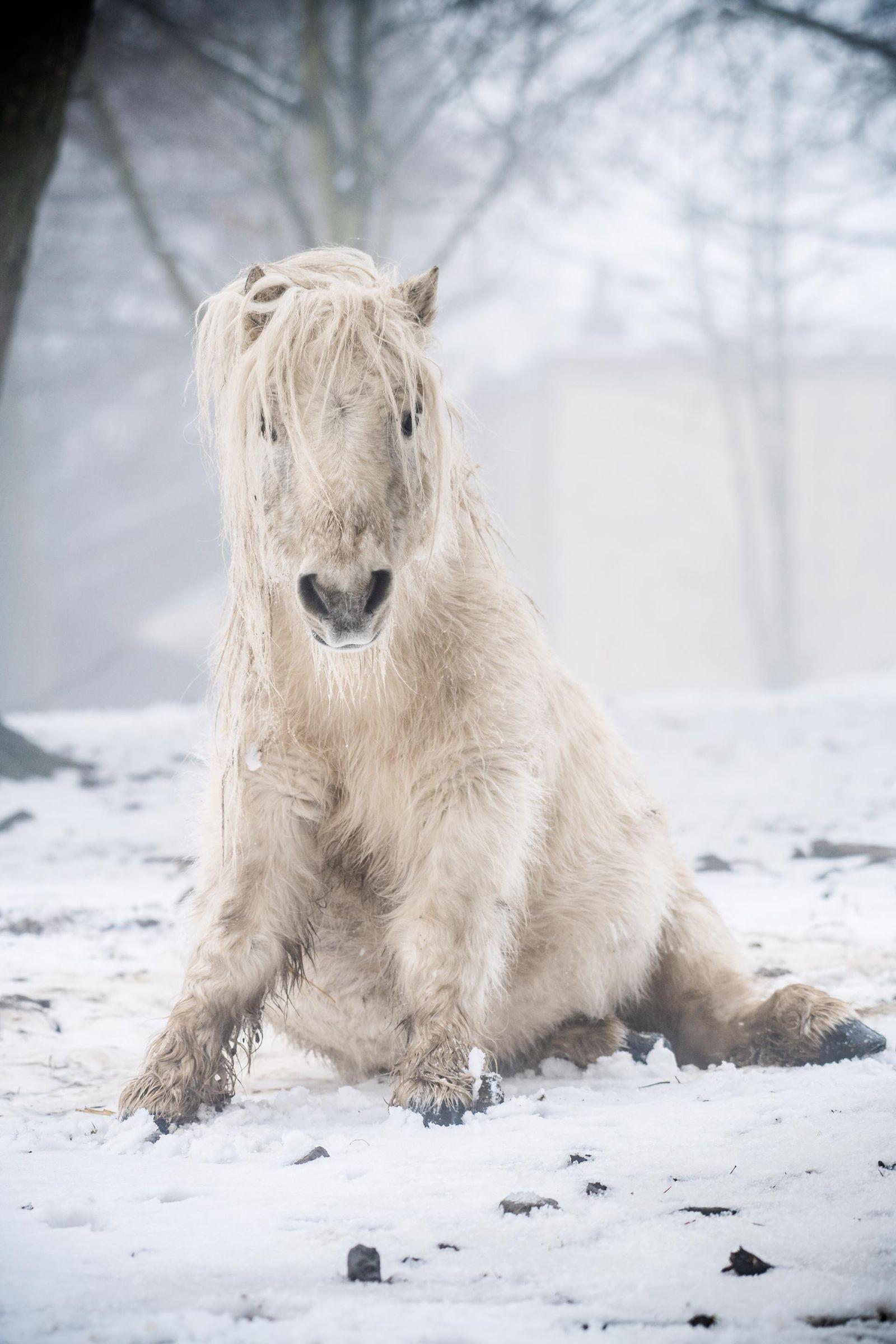 Polar Pony
