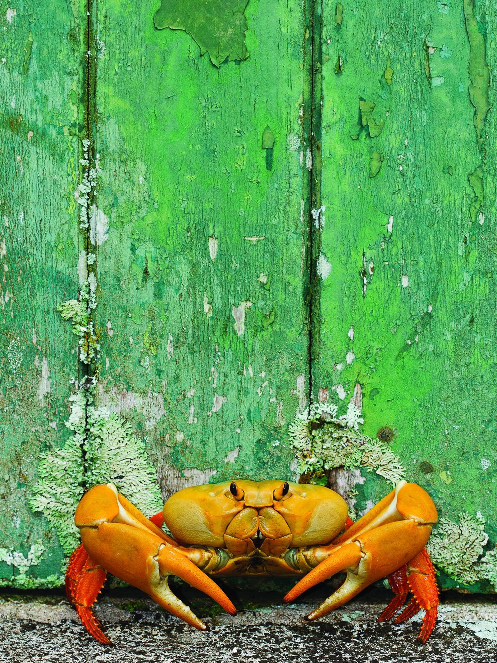 Land crab at the door
