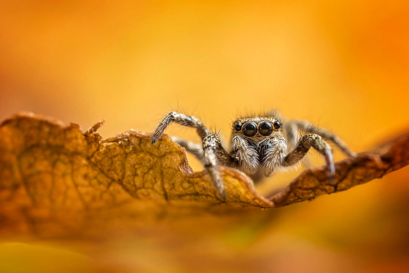 Autumn Jumper