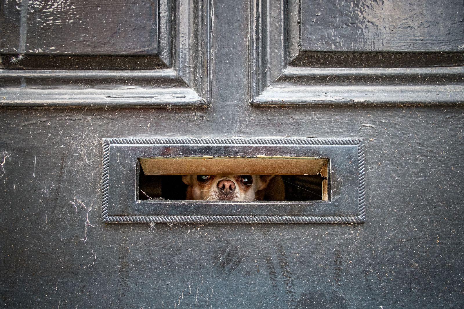 When the postman calls