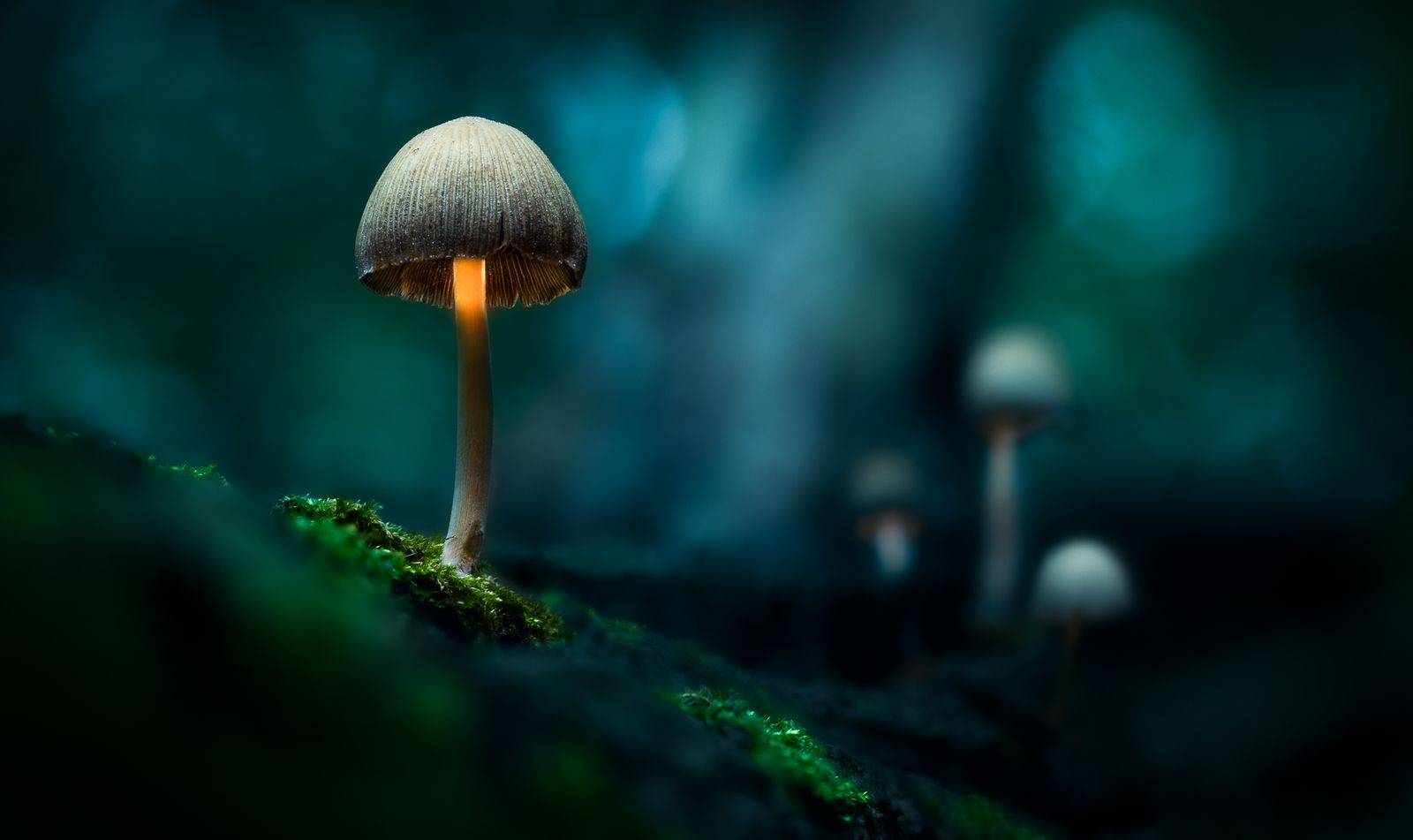 Ethereal Mushrooms