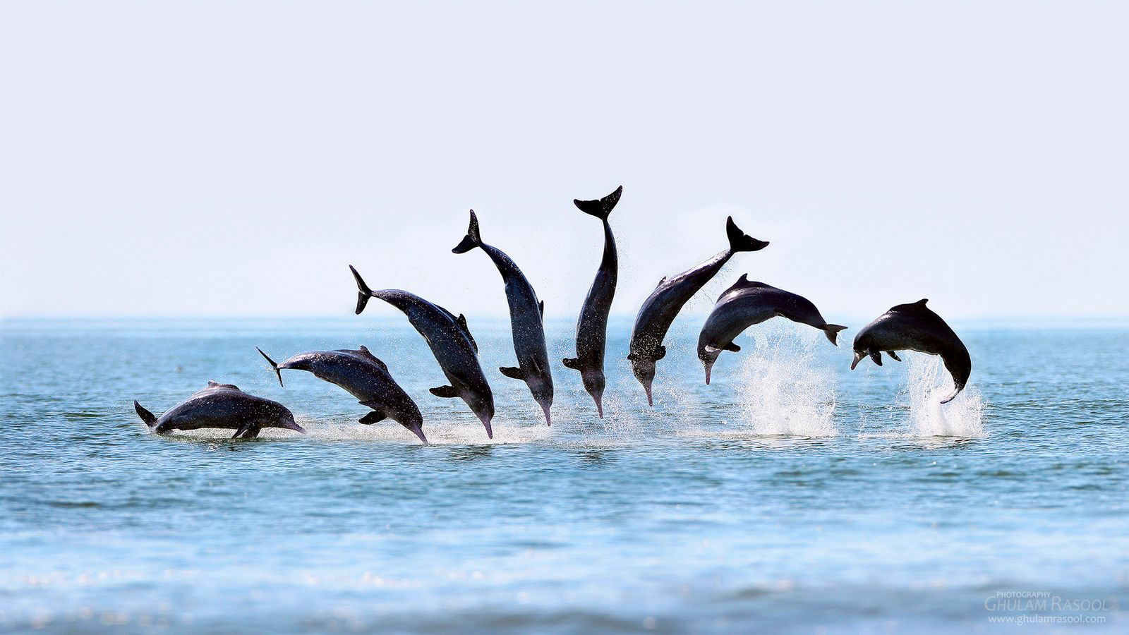 Acrobats of Dolphin