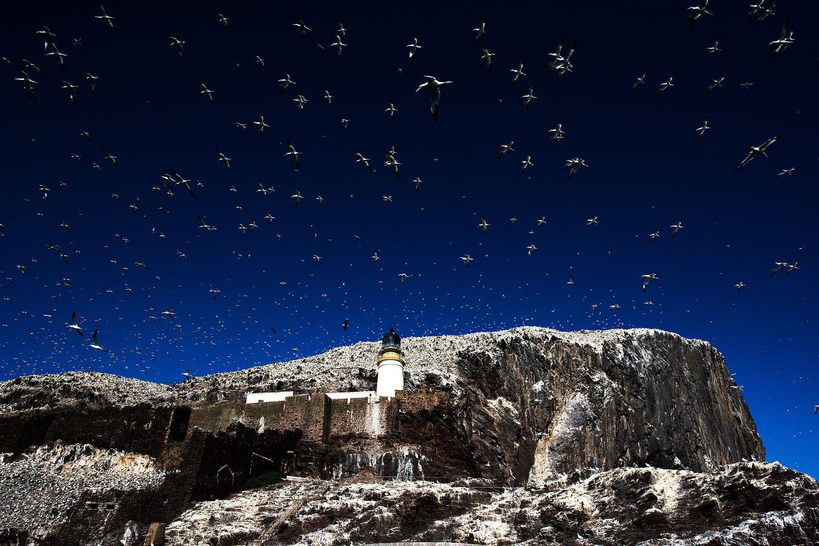 Bass Rock Lighthouse and Gannets