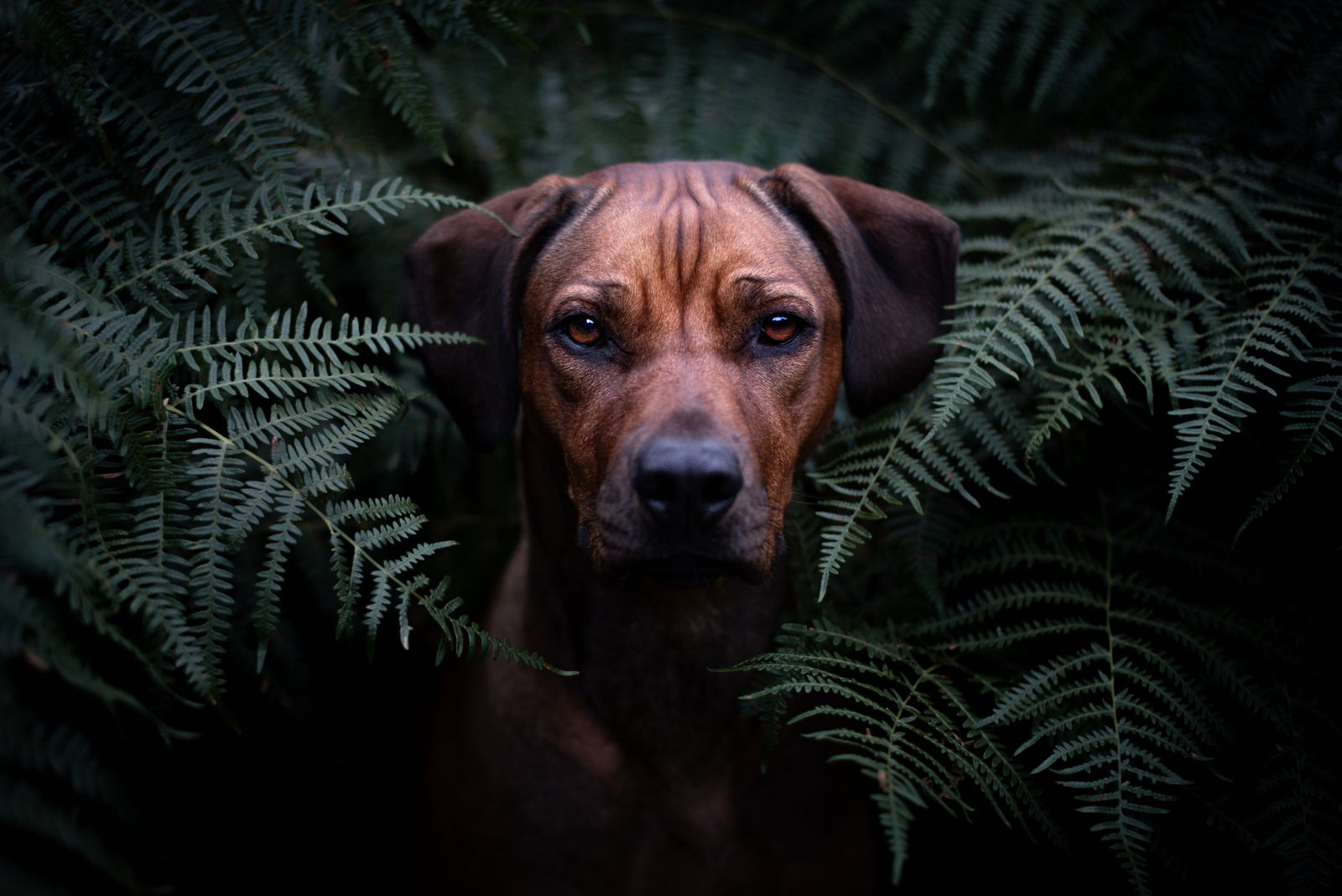 Juno In The Ferns