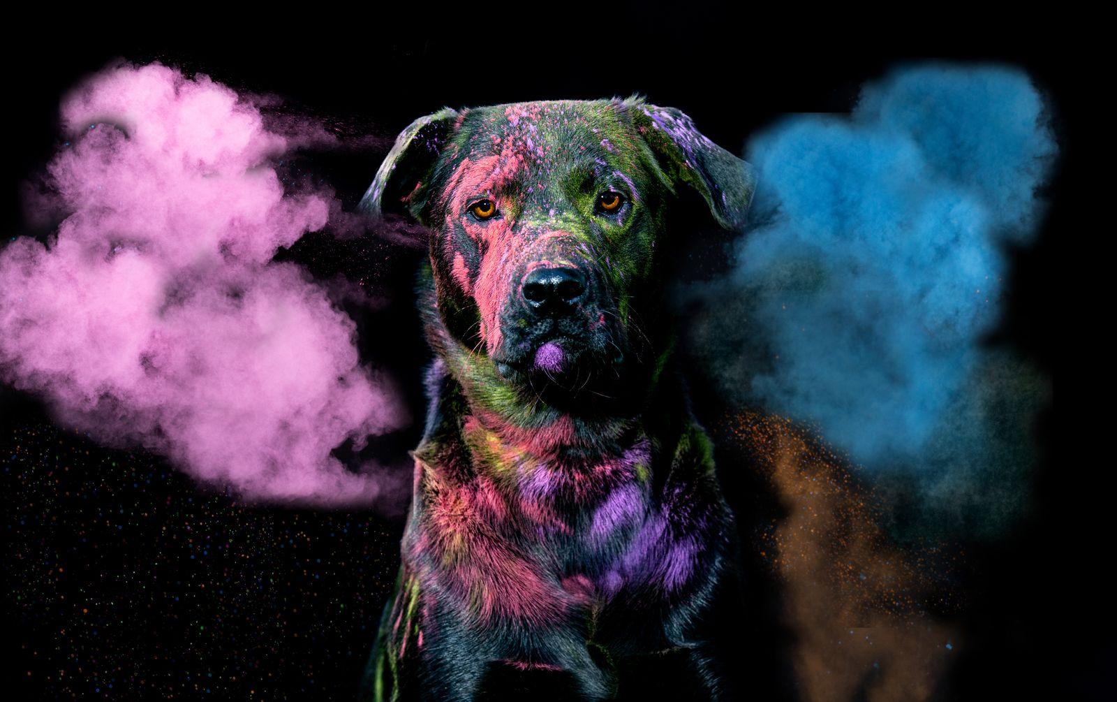 Colour Splash!
