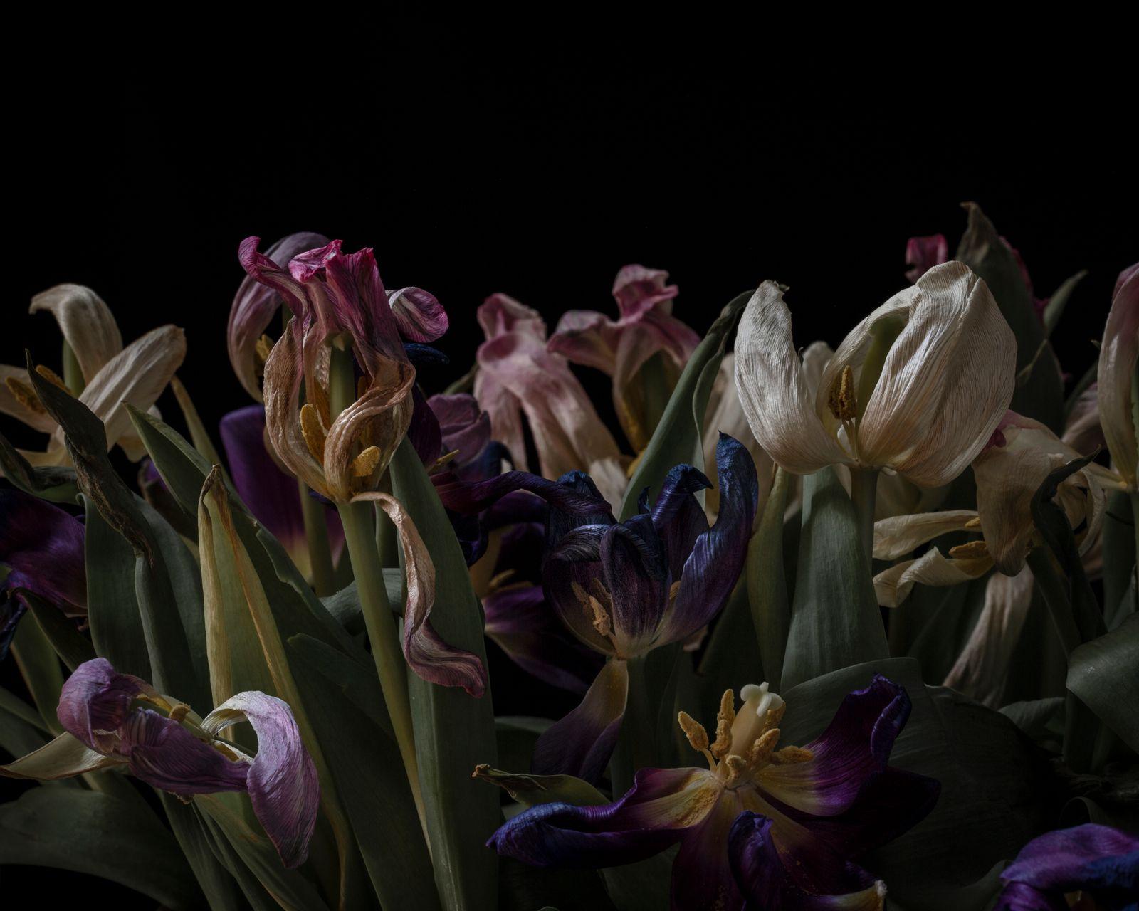 Tulip Disco