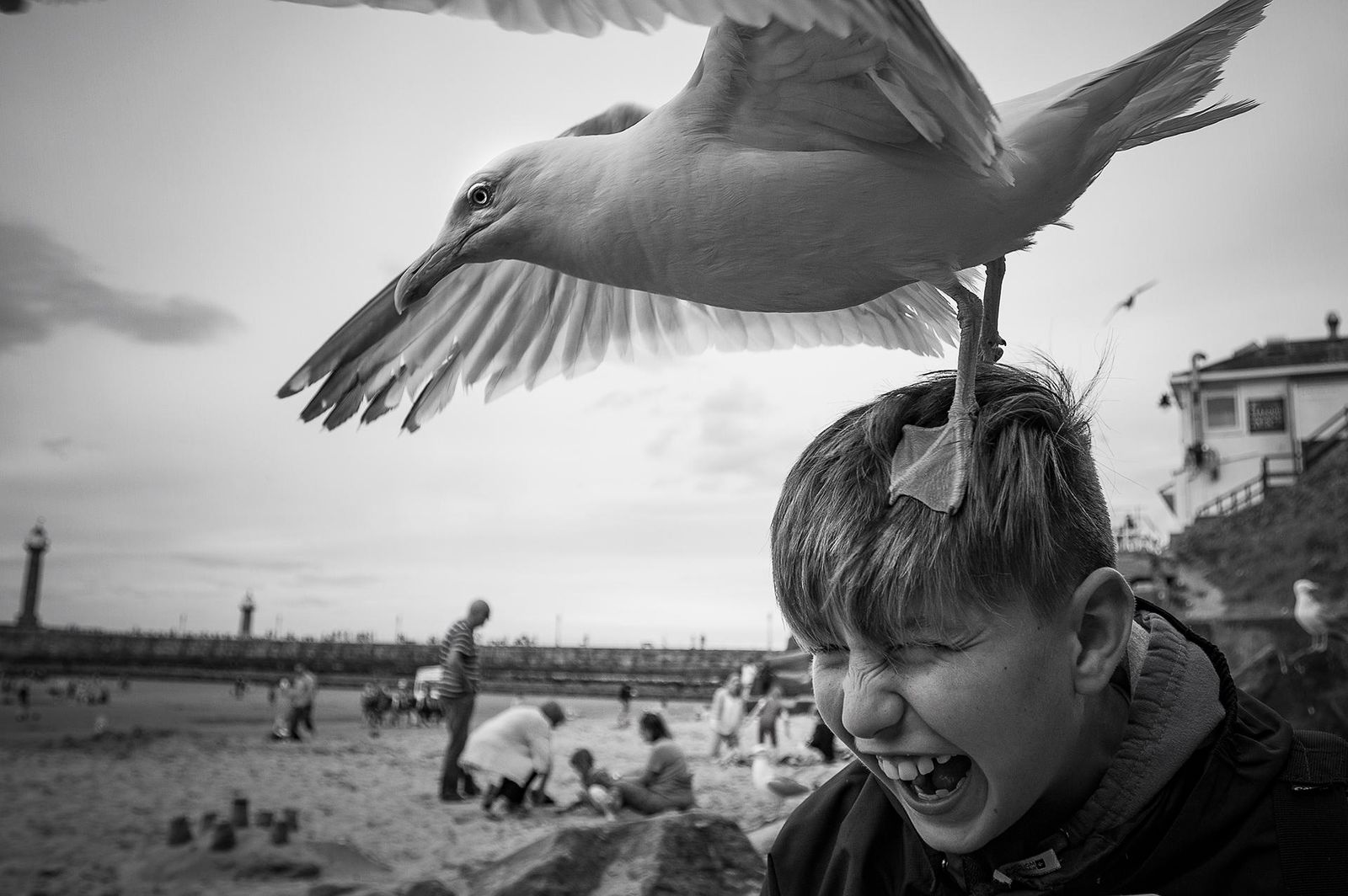 Joe and the herring gull